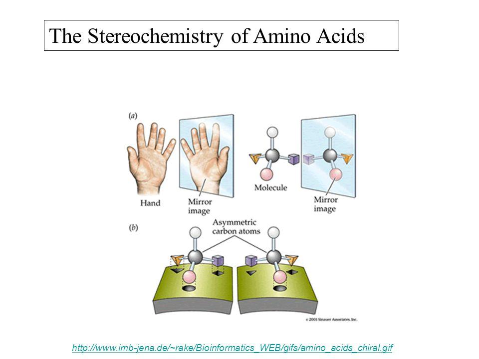 The Stereochemistry of Amino Acids http://www.imb-jena.de/~rake/Bioinformatics_WEB/gifs/amino_acids_chiral.gif