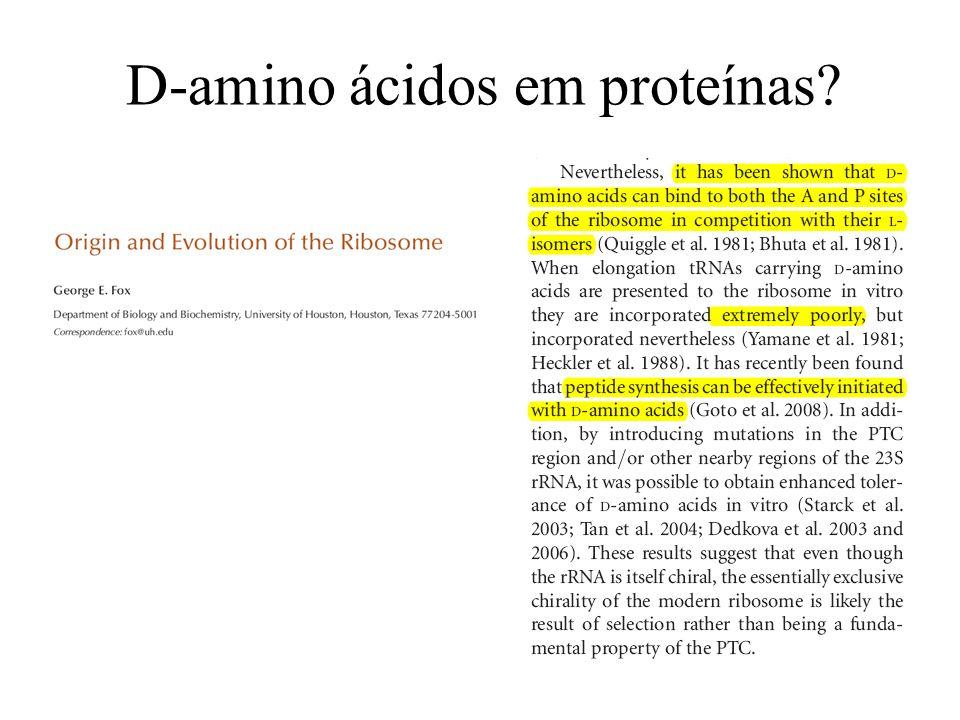 D-amino ácidos em proteínas?
