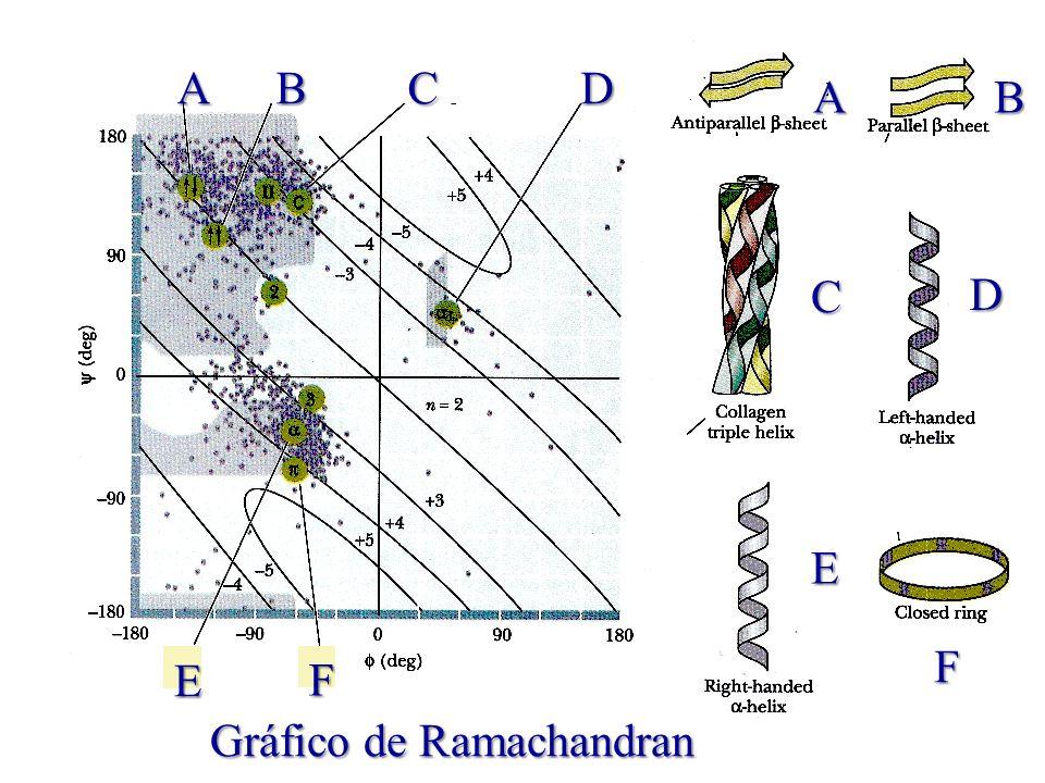 ABCD E F Gráfico de Ramachandran AB C D E F