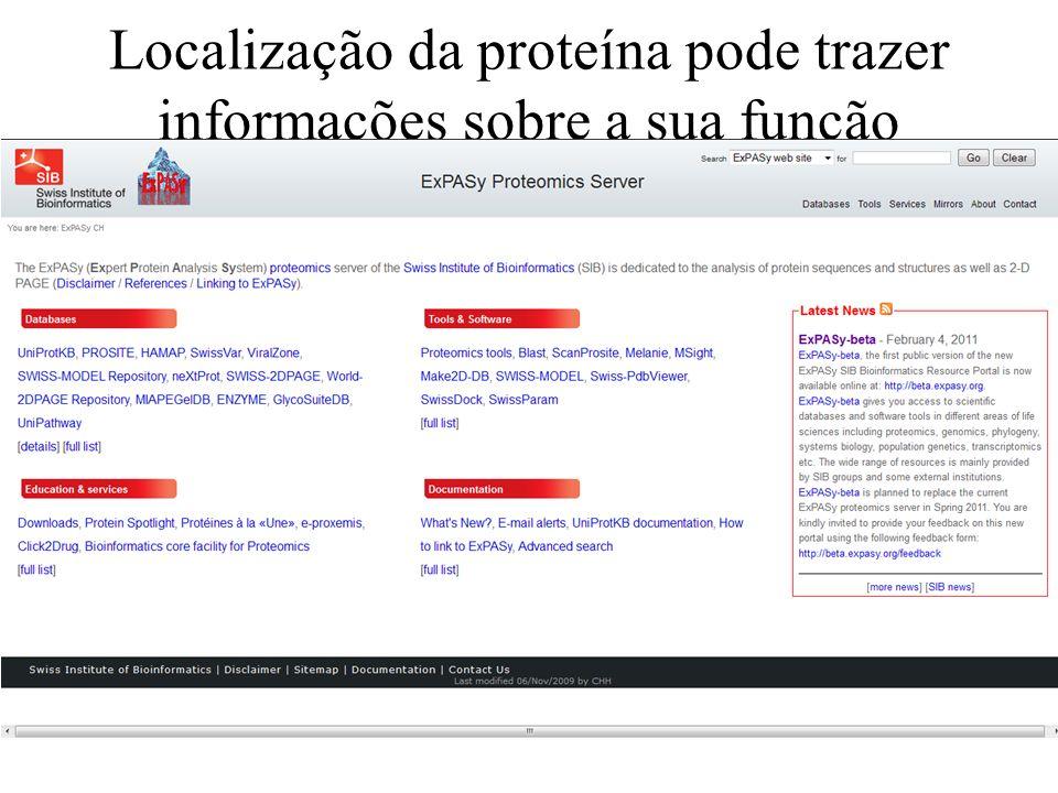Localização da proteína pode trazer informações sobre a sua função
