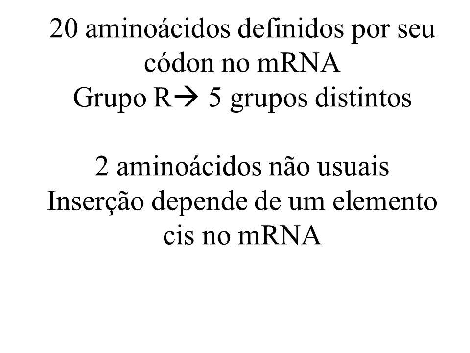 20 aminoácidos definidos por seu códon no mRNA Grupo R 5 grupos distintos 2 aminoácidos não usuais Inserção depende de um elemento cis no mRNA