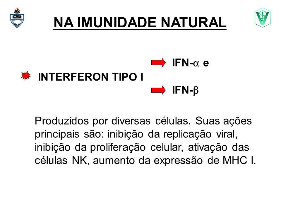NA IMUNIDADE NATURAL INTERFERON TIPO I Produzidos por diversas células. Suas ações principais são: inibição da replicação viral, inibição da prolifera