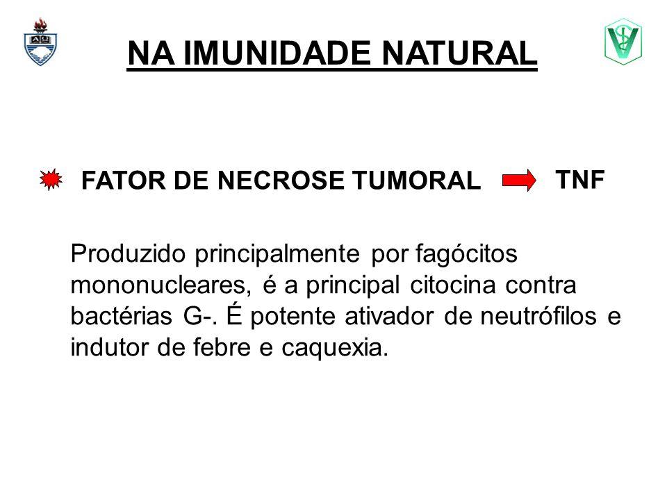NA IMUNIDADE NATURAL FATOR DE NECROSE TUMORAL Produzido principalmente por fagócitos mononucleares, é a principal citocina contra bactérias G-. É pote