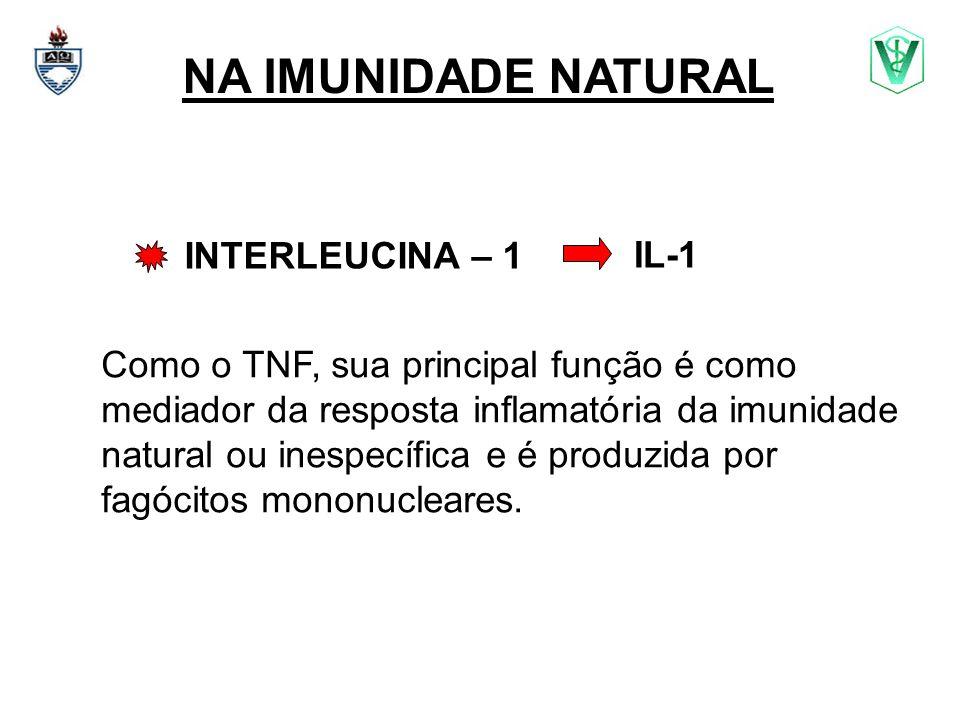 NA IMUNIDADE NATURAL INTERLEUCINA – 1 Como o TNF, sua principal função é como mediador da resposta inflamatória da imunidade natural ou inespecífica e