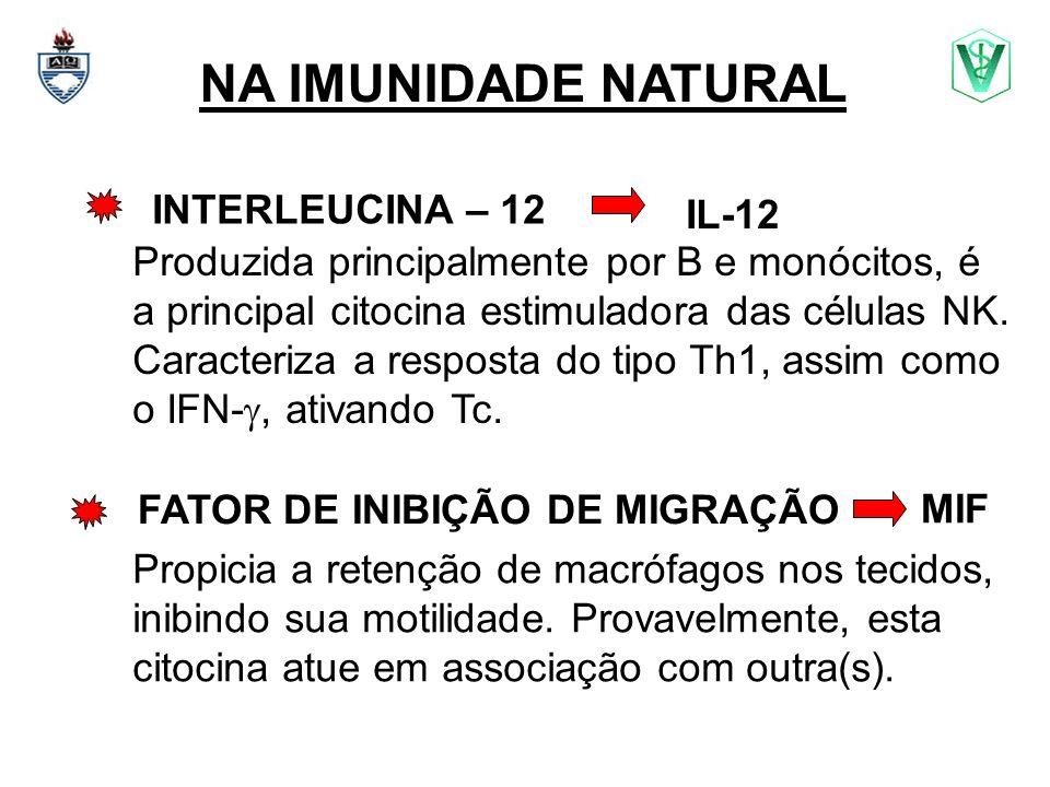 NA IMUNIDADE NATURAL INTERLEUCINA – 12 Produzida principalmente por B e monócitos, é a principal citocina estimuladora das células NK. Caracteriza a r