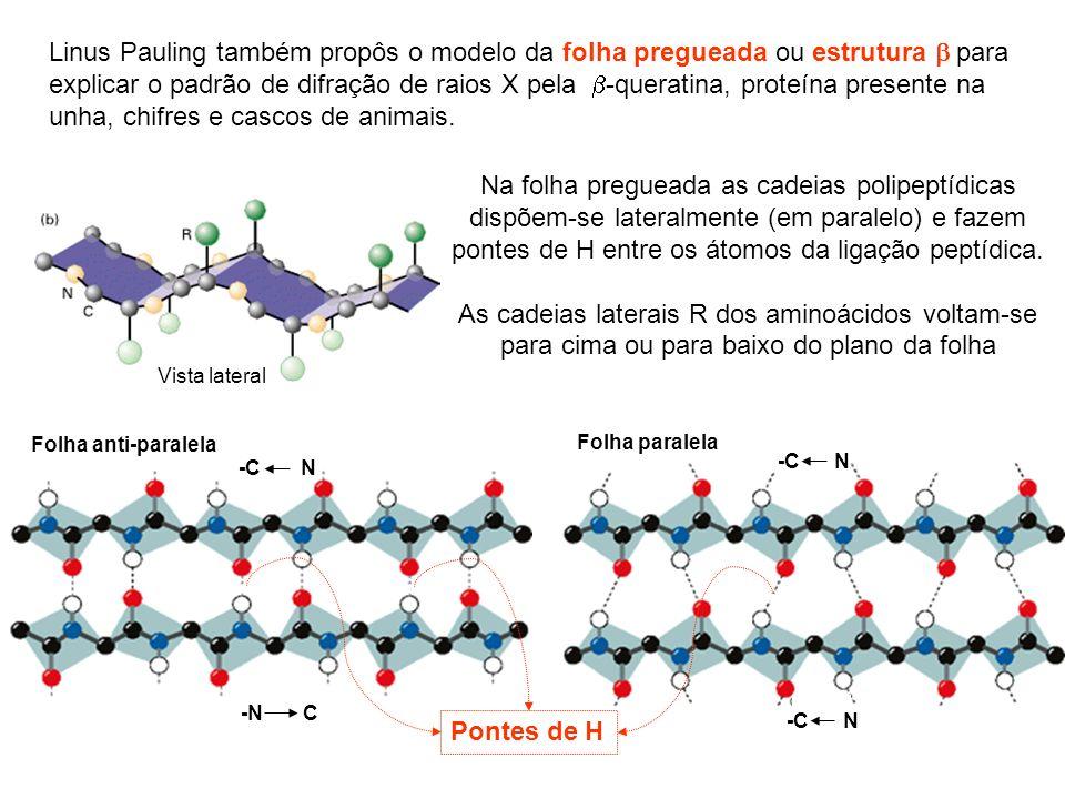 Linus Pauling também propôs o modelo da folha pregueada ou estrutura para explicar o padrão de difração de raios X pela -queratina, proteína presente