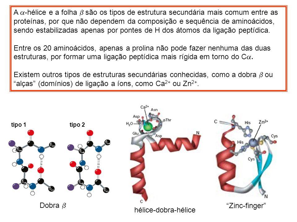 Dobra A -hélice e a folha são os tipos de estrutura secundária mais comum entre as proteínas, por que não dependem da composição e sequência de aminoá