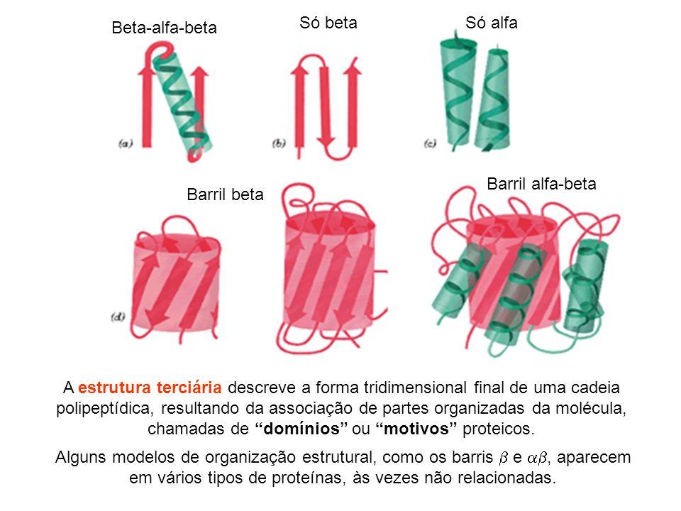 Beta-alfa-beta Só betaSó alfa Barril beta Barril alfa-beta Alguns modelos de organização estrutural, como os barris e, aparecem em vários tipos de pro