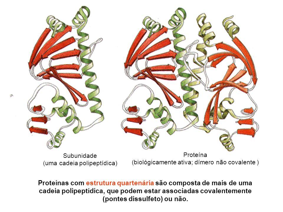 Proteínas com estrutura quartenária são composta de mais de uma cadeia polipeptídica, que podem estar associadas covalentemente (pontes dissulfeto) ou