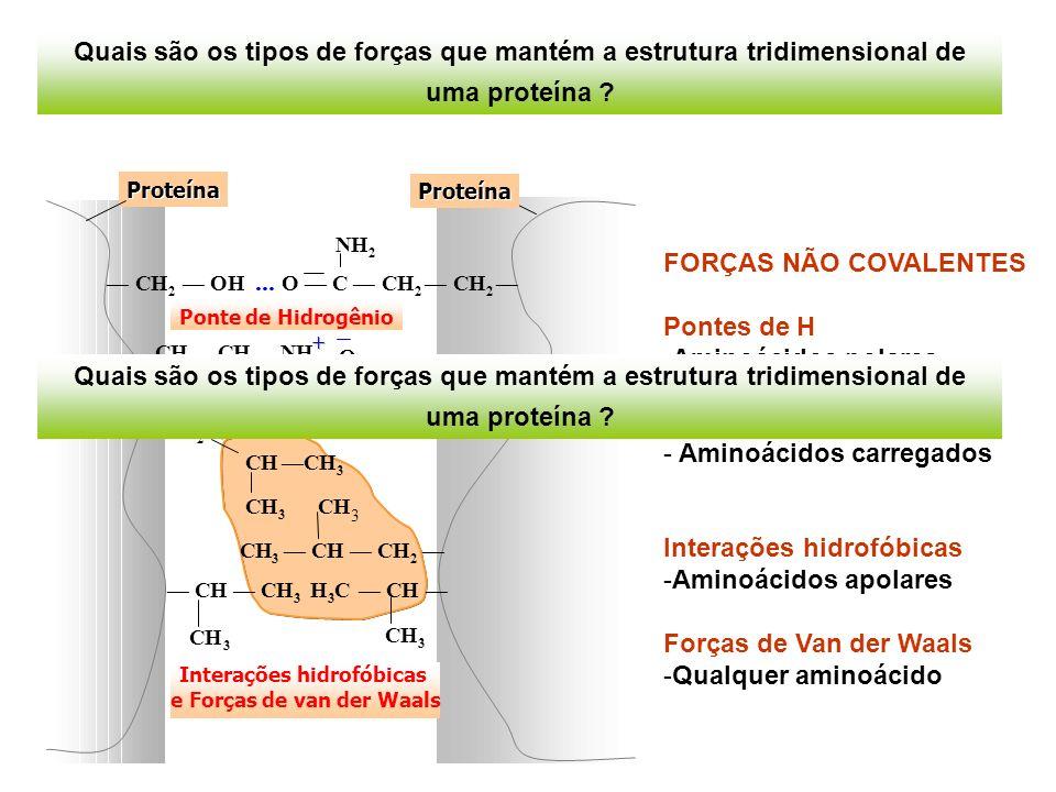 FORÇAS NÃO COVALENTES Pontes de H -Aminoácidos polares Ligações iônicas - Aminoácidos carregados Interações hidrofóbicas -Aminoácidos apolares Forças