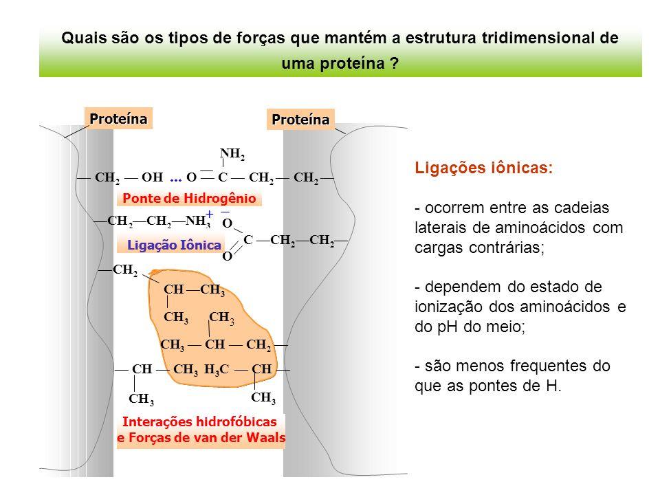 Ligações iônicas: - ocorrem entre as cadeias laterais de aminoácidos com cargas contrárias; - dependem do estado de ionização dos aminoácidos e do pH