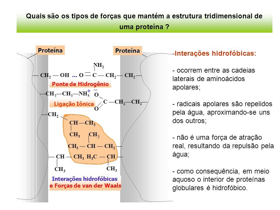 Proteína NH CH 2 OH... OCCH 2 CH 2 2 Proteína O CH Ponte de Hidrogênio Interações hidrofóbicas e Forças de van der Waals 2 CHCH 3 3 3 3 CHCH 2 CHCH 3
