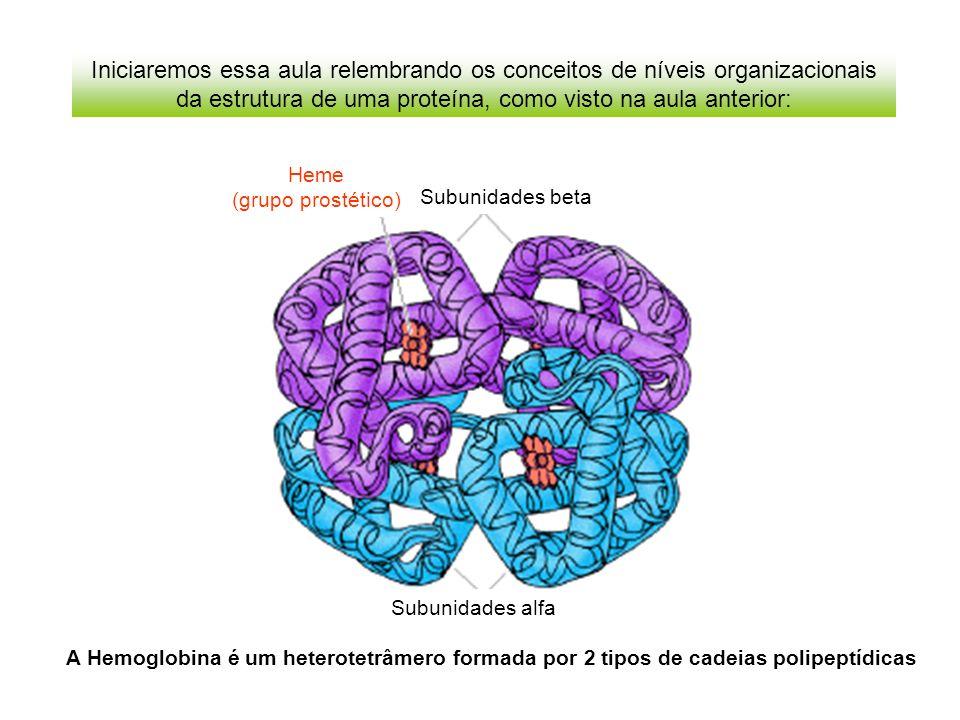 Estrutura quaternária: Associação de mais de uma cadeia polipeptídica No modelo, um tetrâmero composto de 4 cadeias polipeptídicas x 4 Para entender a estrutura 3D das proteínas, vamos dissecá-la em níveis organizacionais para facilitar o estudo: Estrutura terciária: Enovelamento de uma cadeia polipeptídica como um todo.