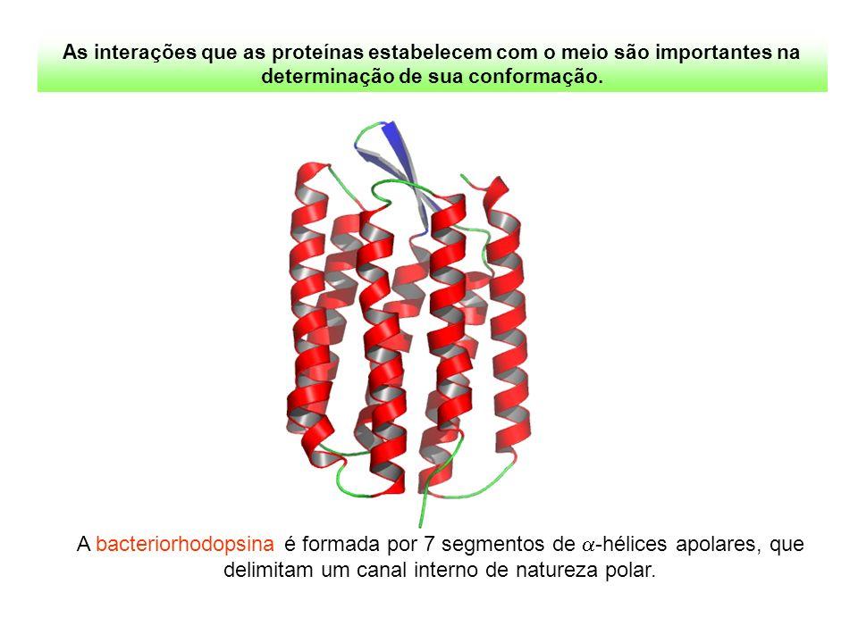 As interações que as proteínas estabelecem com o meio são importantes na determinação de sua conformação. A bacteriorhodopsina é formada por 7 segment