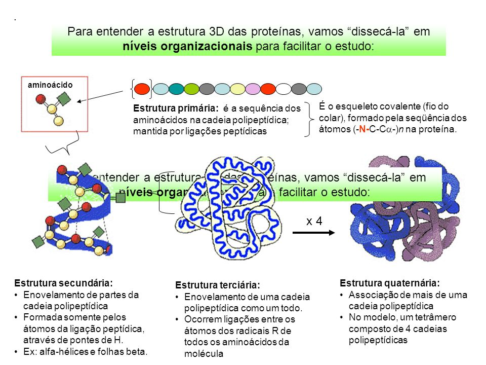 Proteínas com estrutura quartenária são composta de mais de uma cadeia polipeptídica, que podem estar associadas covalentemente (pontes dissulfeto) ou não.