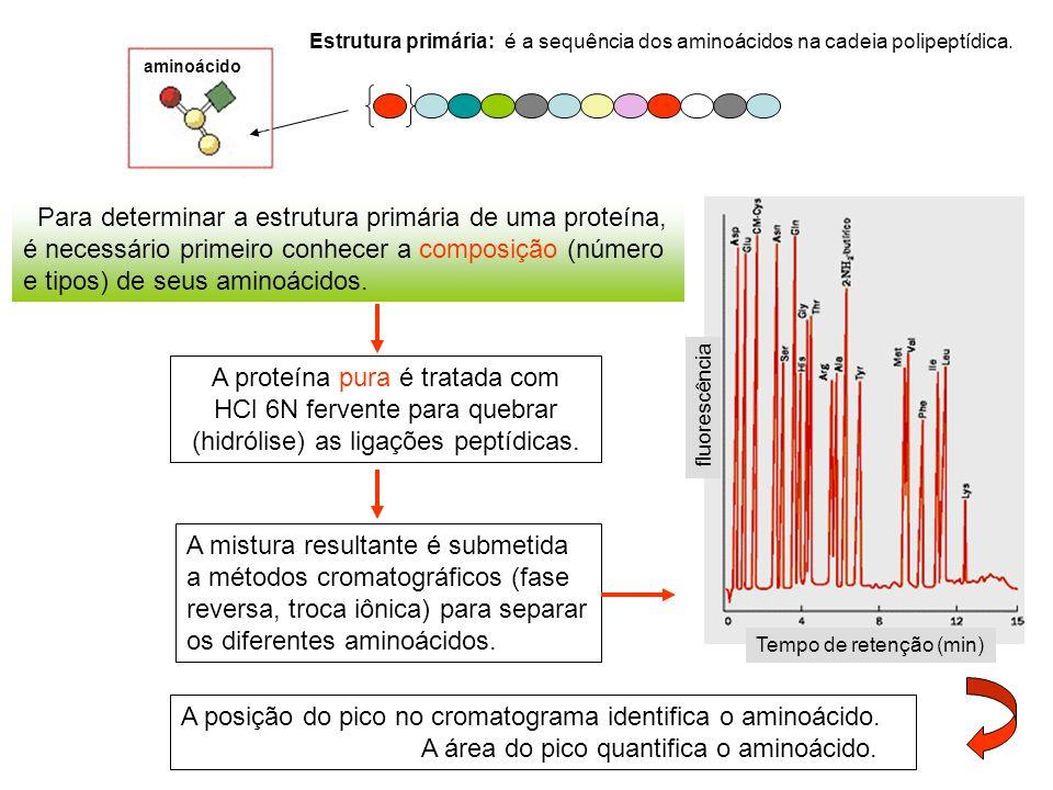 Estrutura primária: é a sequência dos aminoácidos na cadeia polipeptídica. aminoácido Para determinar a estrutura primária de uma proteína, é necessár