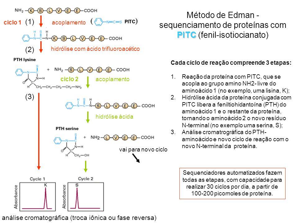Ligações iônicas: - ocorrem entre as cadeias laterais de aminoácidos com cargas contrárias; - dependem do estado de ionização dos aminoácidos e do pH do meio; - são menos frequentes do que as pontes de H.