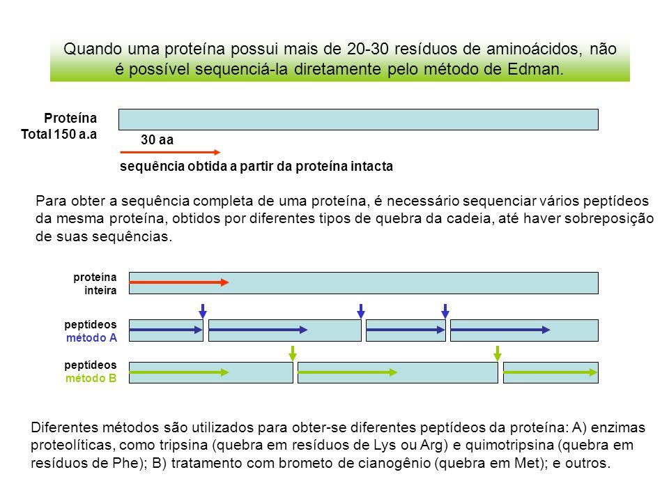 Quando uma proteína possui mais de 20-30 resíduos de aminoácidos, não é possível sequenciá-la diretamente pelo método de Edman. Para obter a sequência