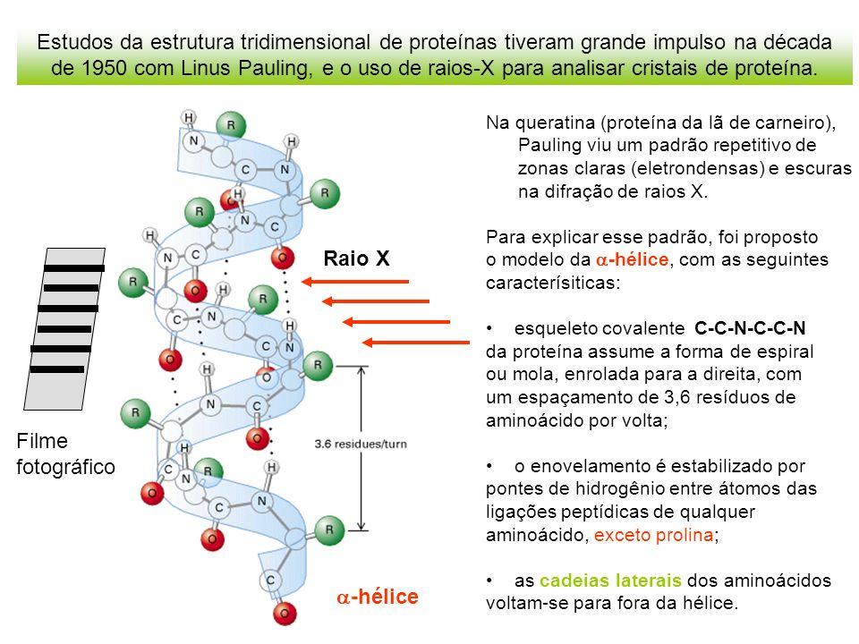 Linus Pauling também propôs o modelo da folha pregueada ou estrutura para explicar o padrão de difração de raios X pela -queratina, proteína presente na unha, chifres e cascos de animais.