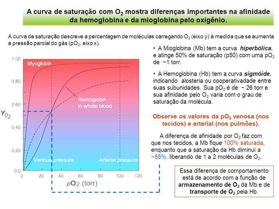 A Mioglobina (Mb) tem a curva hiperbólica, e atinge 50% de saturação (p50) com uma pO 2 de ~1 torr.