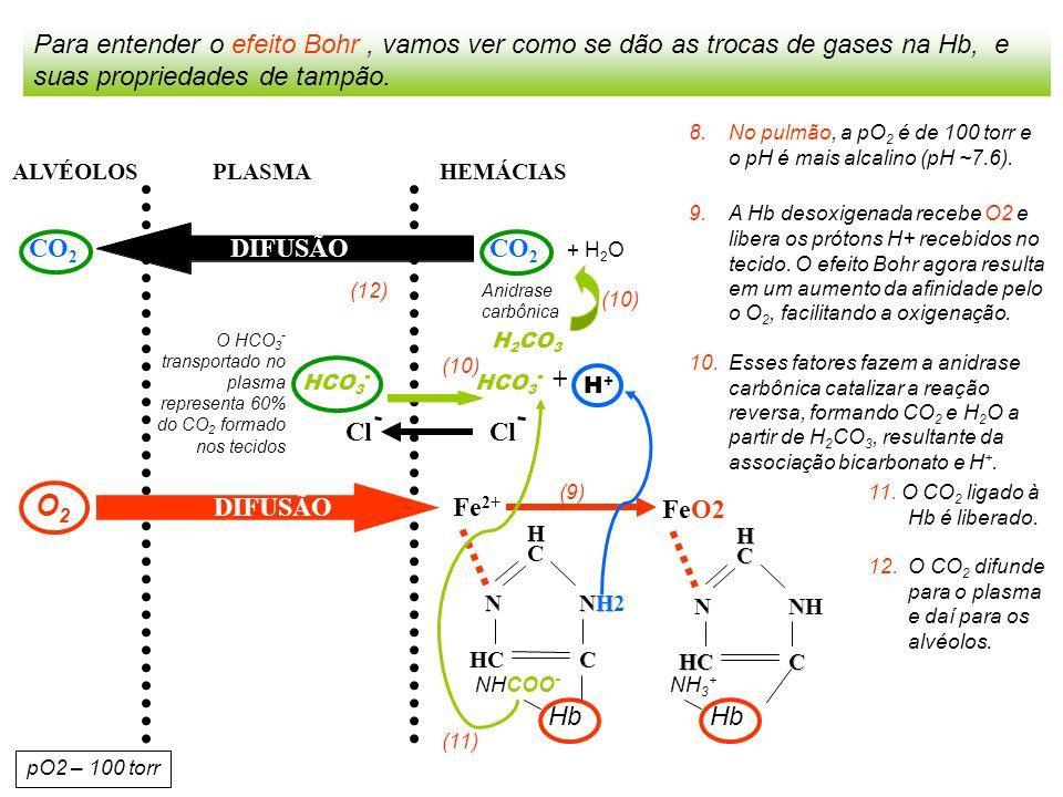 HEMÁCIAS PLASMAALVÉOLOS Para entender o efeito Bohr, vamos ver como se dão as trocas de gases na Hb, e suas propriedades de tampão.