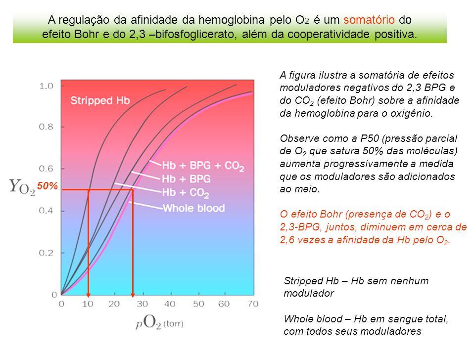 A regulação da afinidade da hemoglobina pelo O 2 é um somatório do efeito Bohr e do 2,3 –bifosfoglicerato, além da cooperatividade positiva.