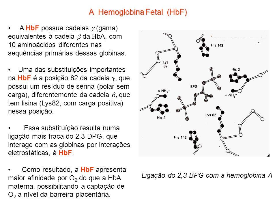 A Hemoglobina Fetal (HbF) A HbF possue cadeias (gama) equivalentes à cadeia da bA, com 10 aminoácidos diferentes nas sequências primárias dessas globinas.