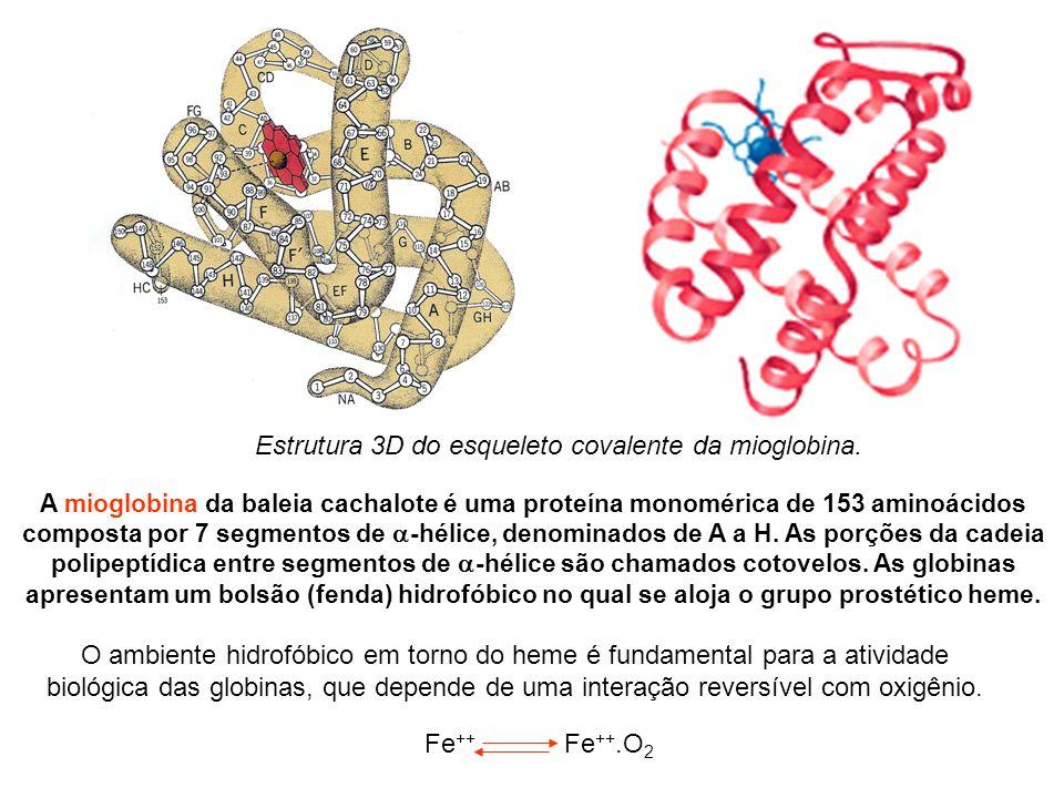 O ambiente hidrofóbico em torno do heme é fundamental para a atividade biológica das globinas, que depende de uma interação reversível com oxigênio.