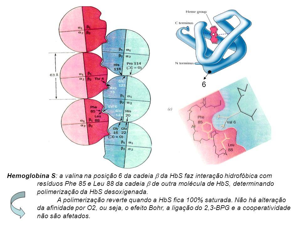 Hemoglobina S: a valina na posição 6 da cadeia da HbS faz interação hidrofóbica com resíduos Phe 85 e Leu 88 da cadeia de outra molécula de HbS, determinando polimerização da HbS desoxigenada.