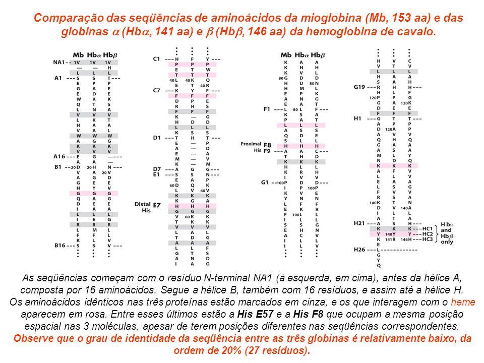 Comparação das seqüências de aminoácidos da mioglobina (Mb, 153 aa) e das globinas (Hb, 141 aa) e (Hb, 146 aa) da hemoglobina de cavalo.