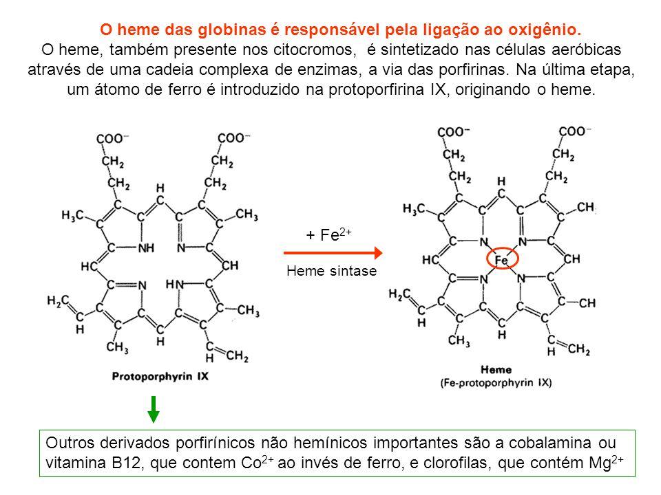 Outros derivados porfirínicos não hemínicos importantes são a cobalamina ou vitamina B12, que contem Co 2+ ao invés de ferro, e clorofilas, que contém Mg 2+ O heme das globinas é responsável pela ligação ao oxigênio.