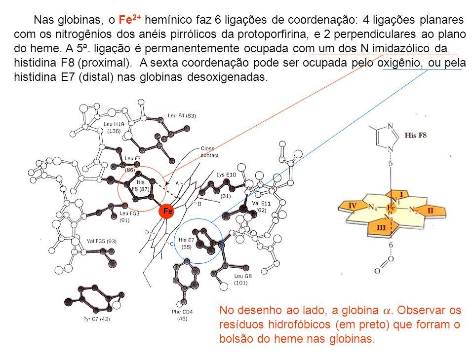 Algumas variantes de hemoglobina com importância clínica Hemoglobina Origem geográfica Substituição de Aminoácido % presente em heterozigotos * Existem outros variantes de HbG de cadeia.