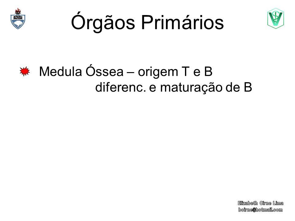 Órgãos Primários Medula Óssea – origem T e B diferenc. e maturação de B