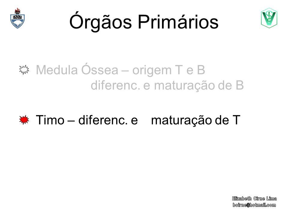 Órgãos Primários Medula Óssea – origem T e B diferenc. e maturação de B Timo – diferenc. e maturação de T