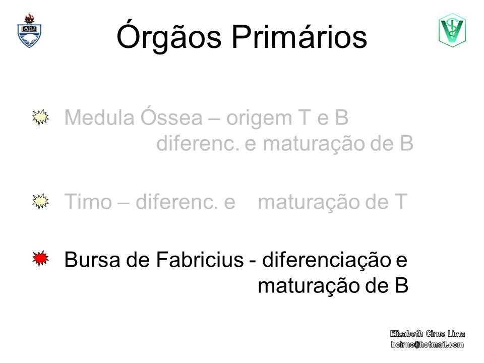 Órgãos Primários Medula Óssea – origem T e B diferenc. e maturação de B Timo – diferenc. e maturação de T Bursa de Fabricius - diferenciação e maturaç