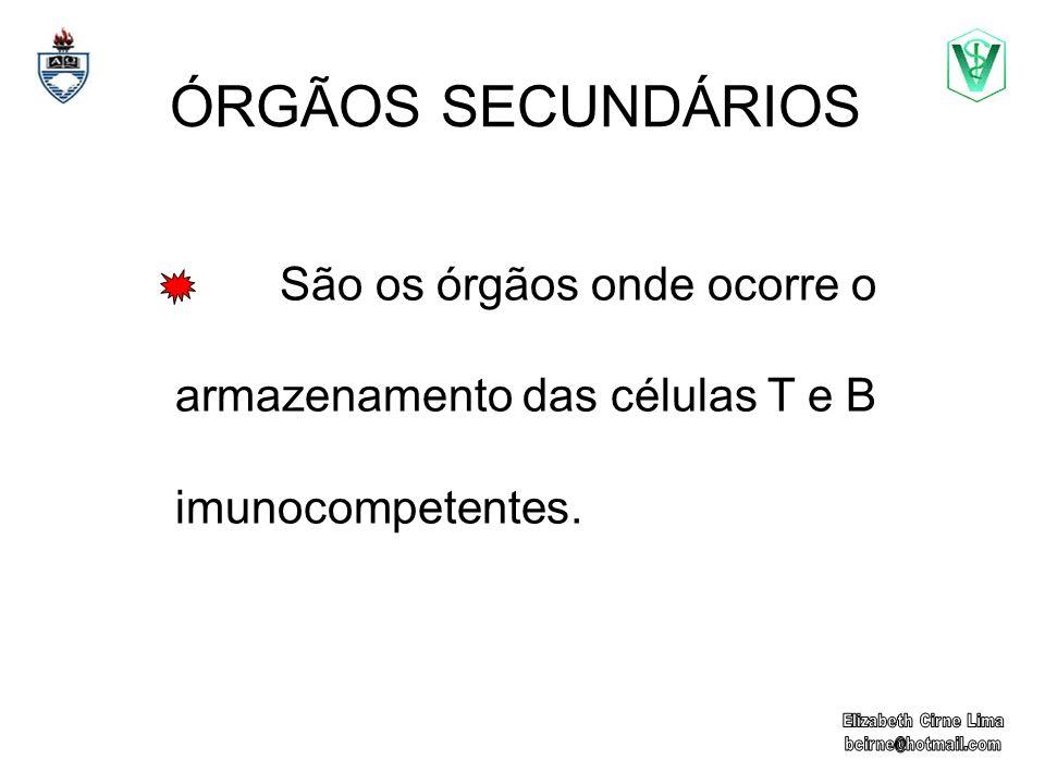 ÓRGÃOS SECUNDÁRIOS São os órgãos onde ocorre o armazenamento das células T e B imunocompetentes.