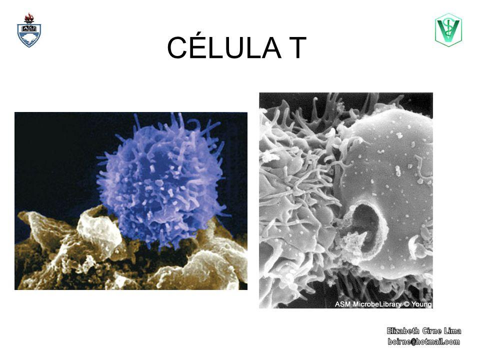 CÉLULA T
