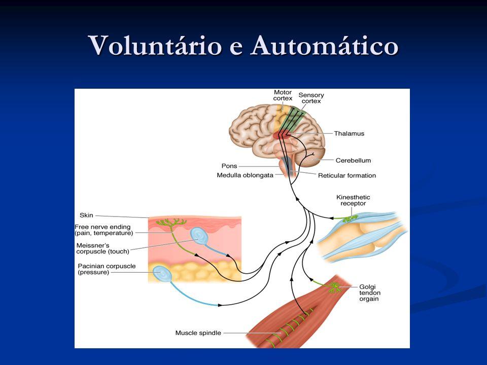 Voluntário e Automático