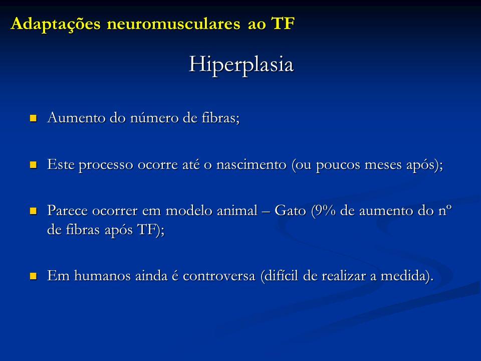 Hiperplasia Aumento do número de fibras; Aumento do número de fibras; Este processo ocorre até o nascimento (ou poucos meses após); Este processo ocor