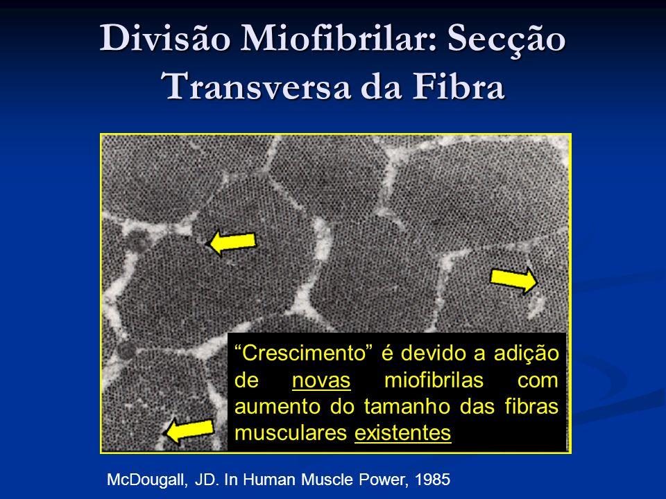Crescimento é devido a adição de novas miofibrilas com aumento do tamanho das fibras musculares existentes McDougall, JD. In Human Muscle Power, 1985