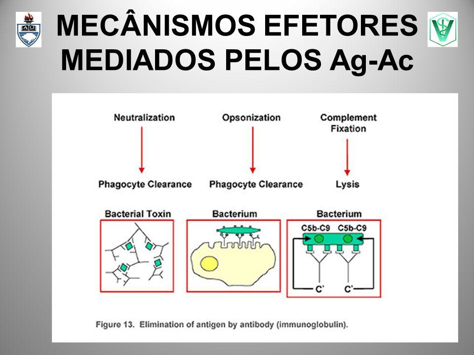 MECÂNISMOS EFETORES MEDIADOS PELOS Ag-Ac