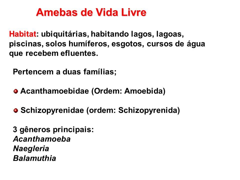 Amebas de Vida Livre Pertencem a duas famílias; Acanthamoebidae (Ordem: Amoebida) Schizopyrenidae (ordem: Schizopyrenida) 3 gêneros principais: Acanth