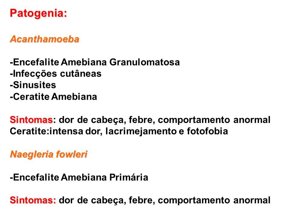 Patogenia:Acanthamoeba -Encefalite Amebiana Granulomatosa -Infecções cutâneas -Sinusites -Ceratite Amebiana Sintomas Sintomas: dor de cabeça, febre, c