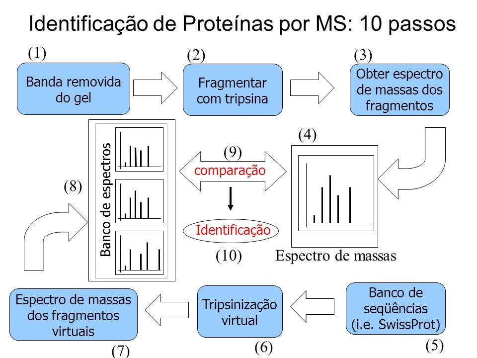 Identificação de Proteínas por MS: 10 passos Espectro de massas dos fragmentos virtuais Tripsinização virtual Banco de seqüências (i.e. SwissProt) Ban