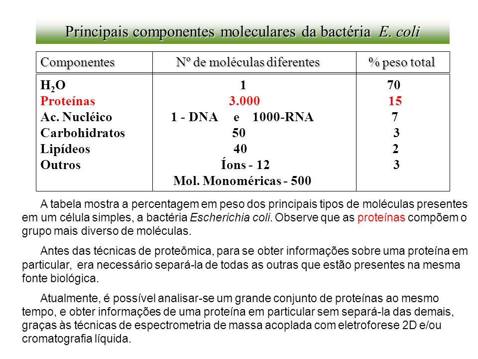 Principais componentes moleculares da bactéria E. coli Componentes Nº de moléculas diferentes % peso total H 2 O 1 70 Proteínas 3.000 15 Ac. Nucléico