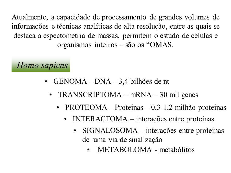 METABOLOMA - metabólitos GENOMA – DNA – 3,4 bilhões de nt SIGNALOSOMA – interações entre proteínas de uma via de sinalização TRANSCRIPTOMA – mRNA – 30
