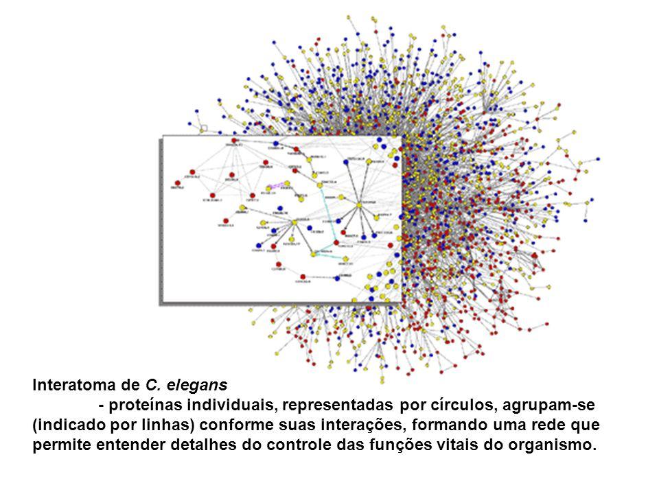 Interatoma de C. elegans - proteínas individuais, representadas por círculos, agrupam-se (indicado por linhas) conforme suas interações, formando uma