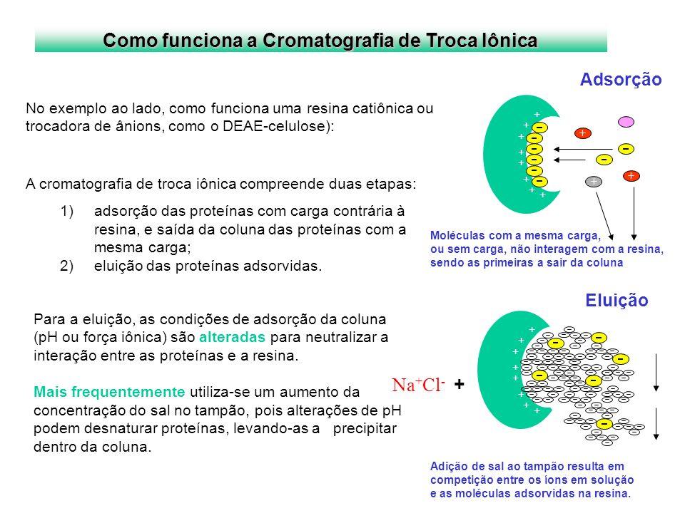 Como funciona a Cromatografia de Troca Iônica Adsorção Eluição + + + + + + + + Moléculas com a mesma carga, ou sem carga, não interagem com a resina,