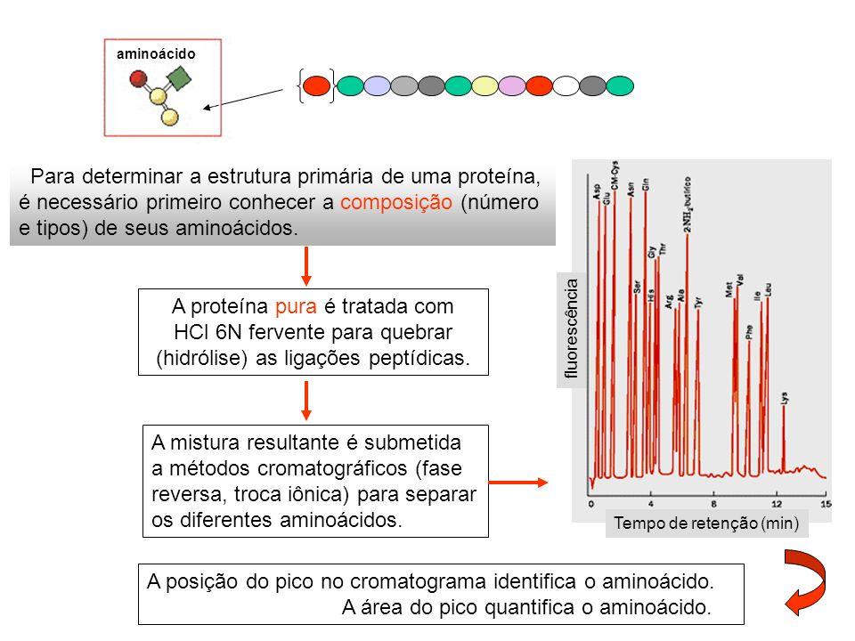 aminoácido Para determinar a estrutura primária de uma proteína, é necessário primeiro conhecer a composição (número e tipos) de seus aminoácidos. A p