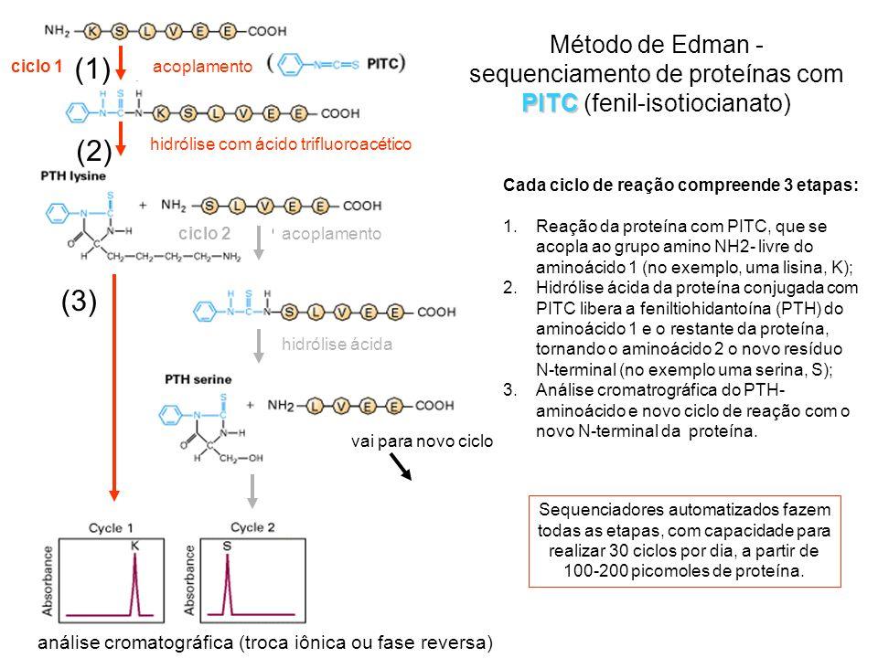 PITC Método de Edman - sequenciamento de proteínas com PITC (fenil-isotiocianato) ciclo 1 ciclo 2 hidrólise com ácido trifluoroacético hidrólise ácida